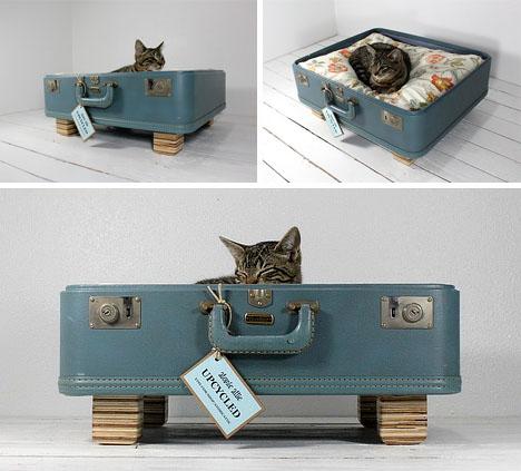 cat-bed-cute-overload