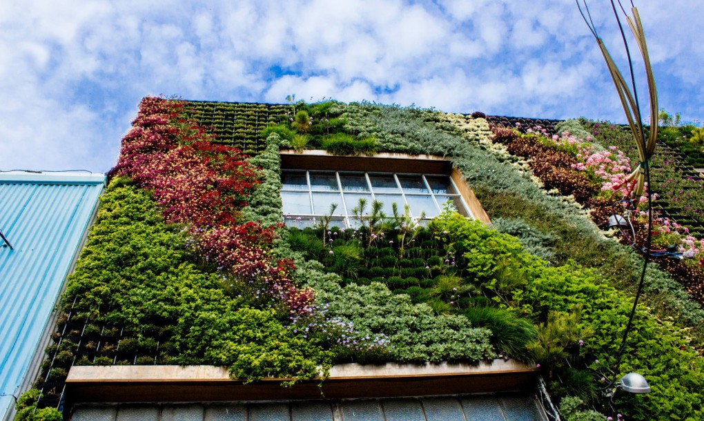 Planted-Design-Living-Wall-5-1020x610 (1)