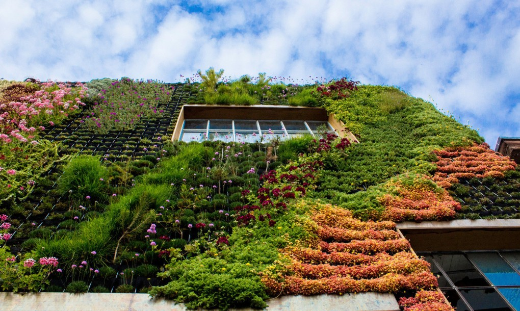 Planted-Design-Living-Wall-6-1020x610