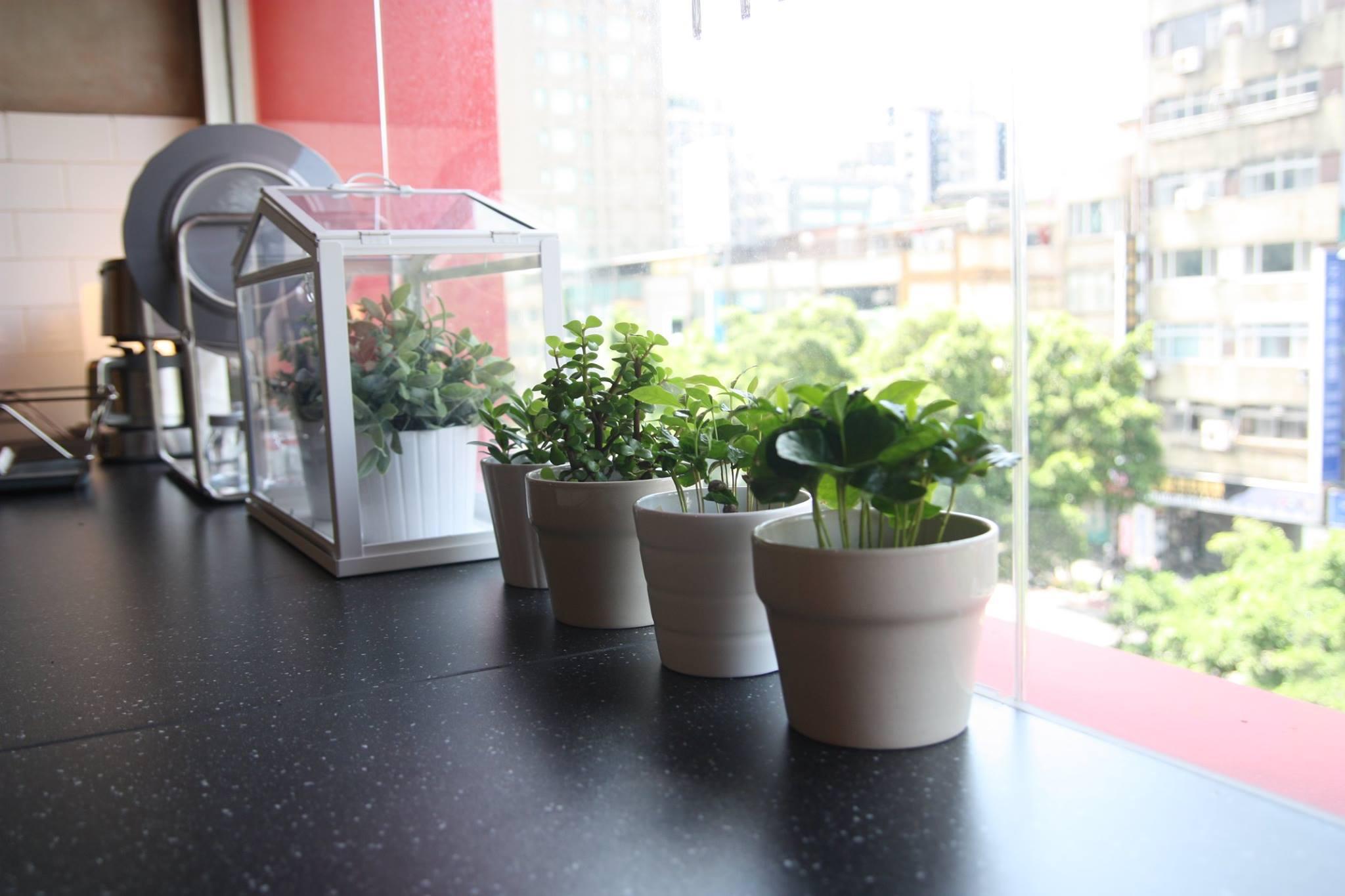 白色小花盆放在黑色靠落地窗的吧台桌上