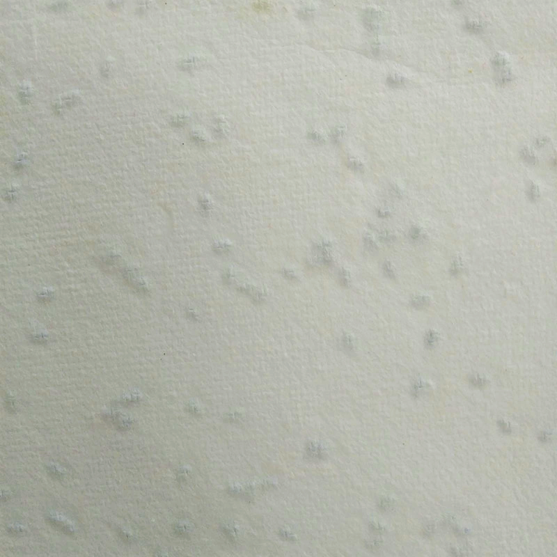 種子在紙裡
