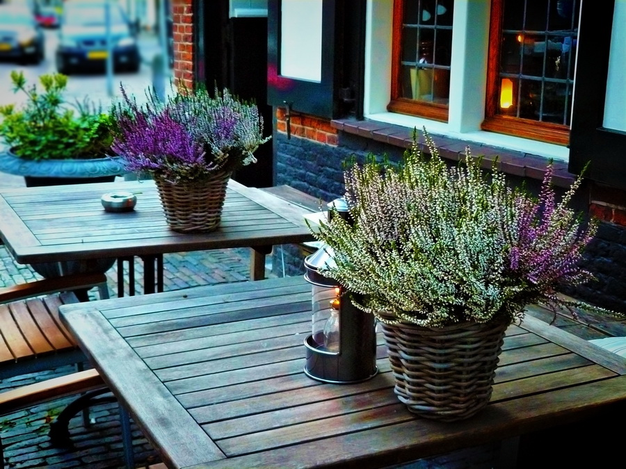 種在花盆裡的紫色薰衣草放在咖啡桌上